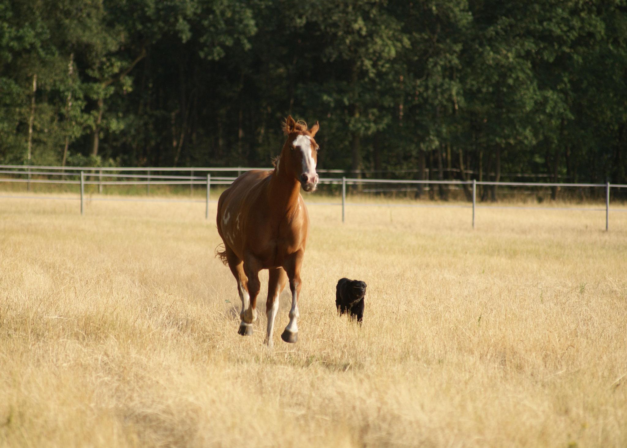 Hund-am-Pferd-2048