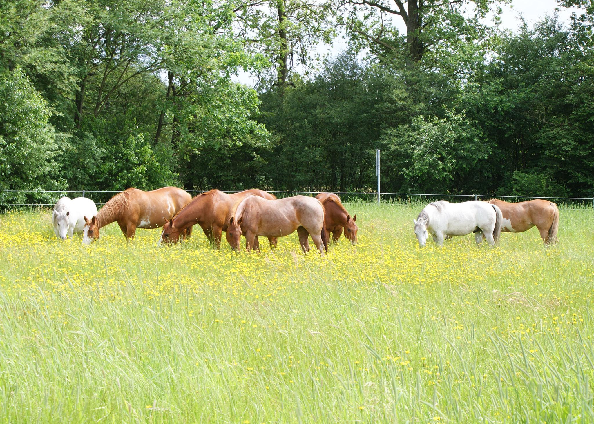 Pferde-Weide-2048