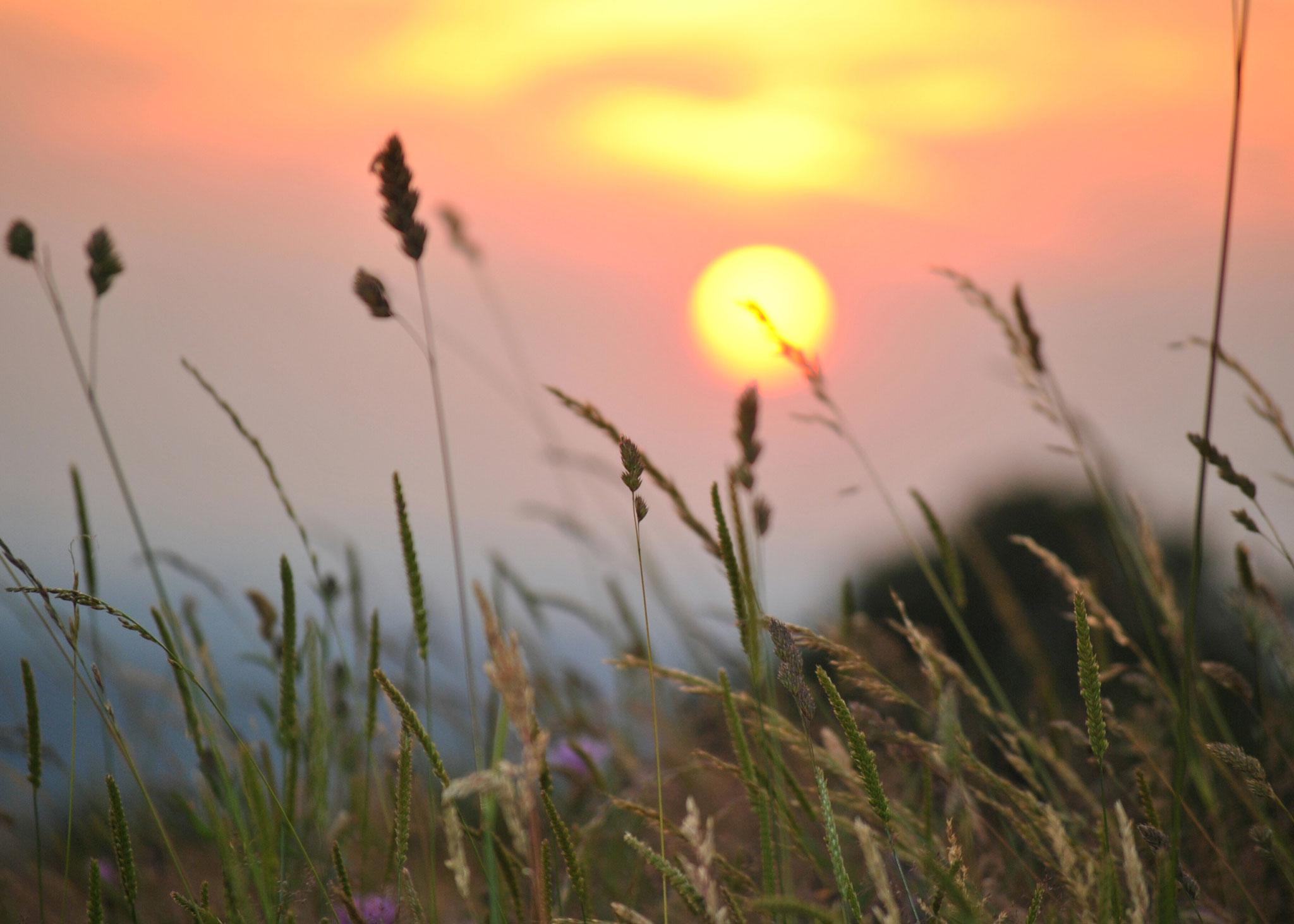 Weide-Sonnenuntergang-2048