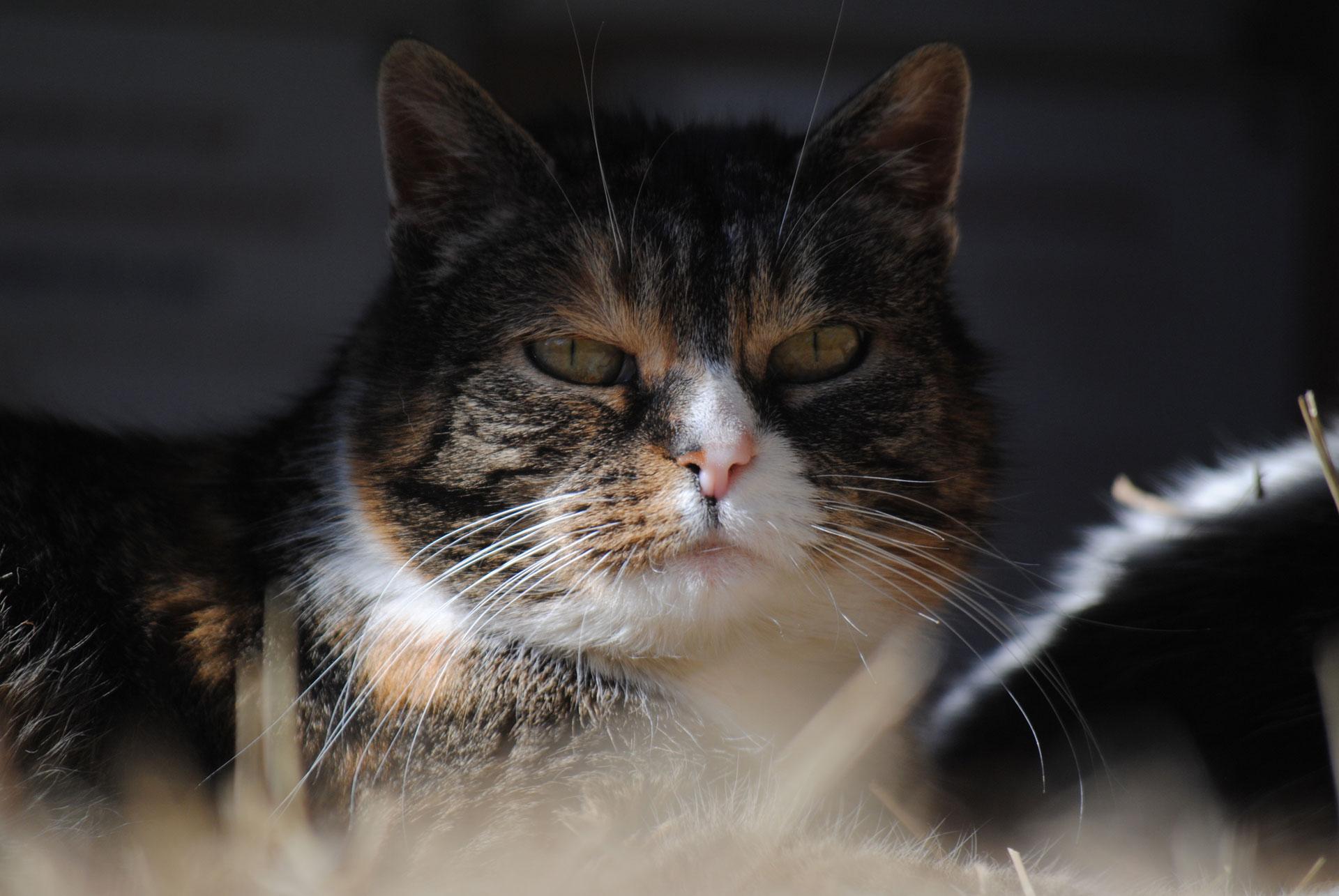 Katze Abby