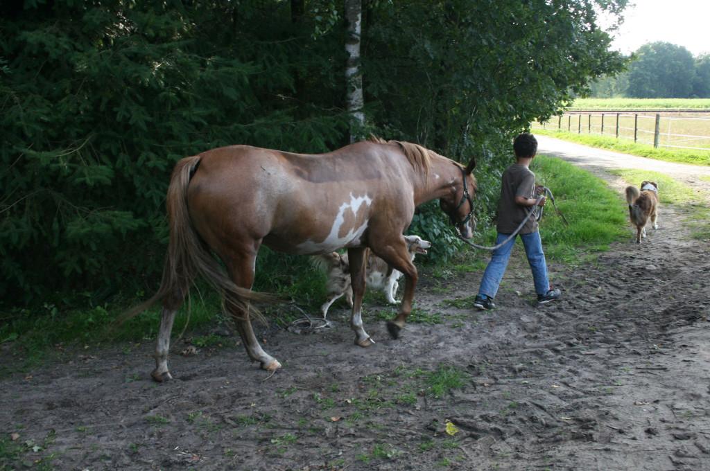 Ergotherapie für Kinder mit Pferd und Hund
