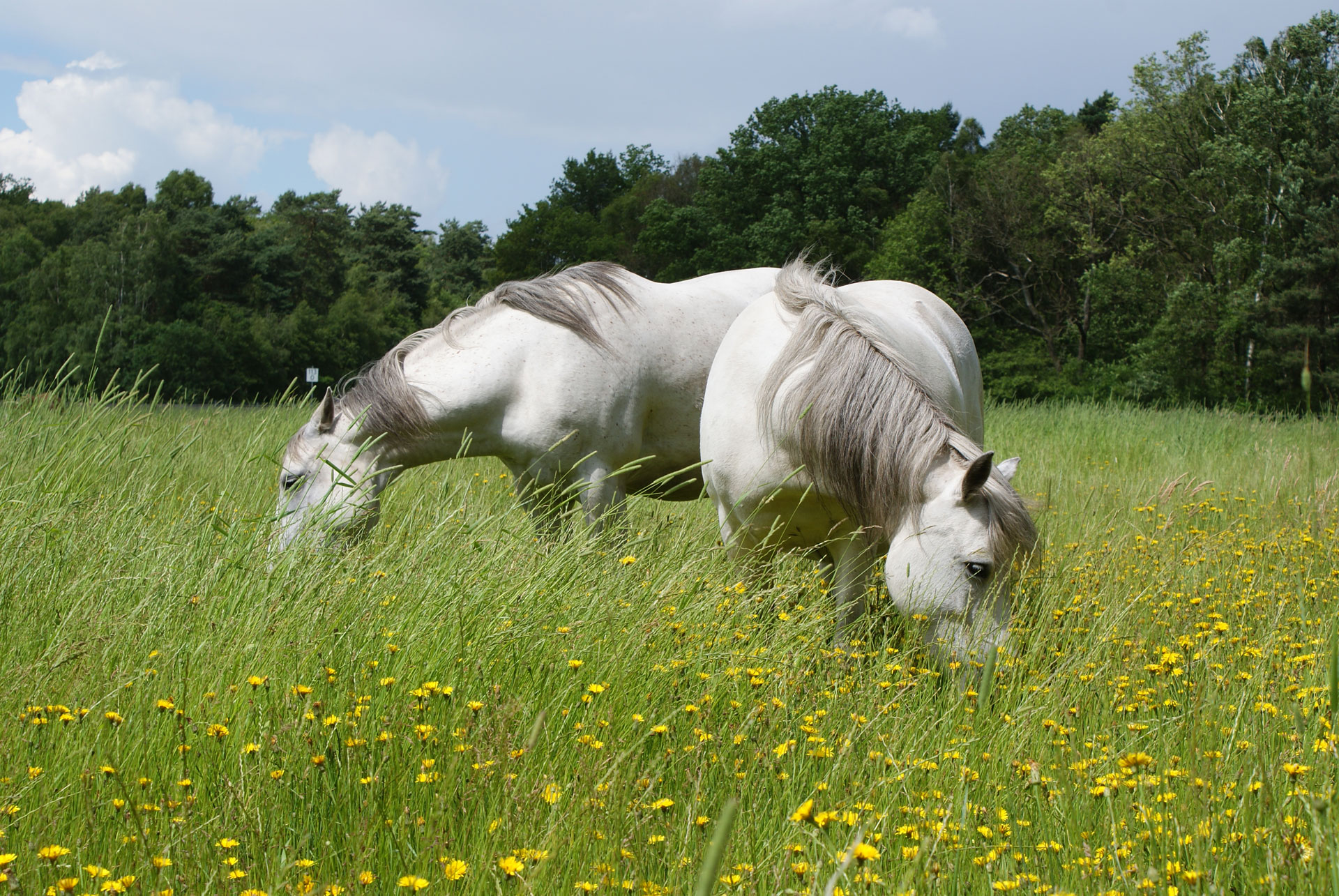 Pony Jack auf der Weide