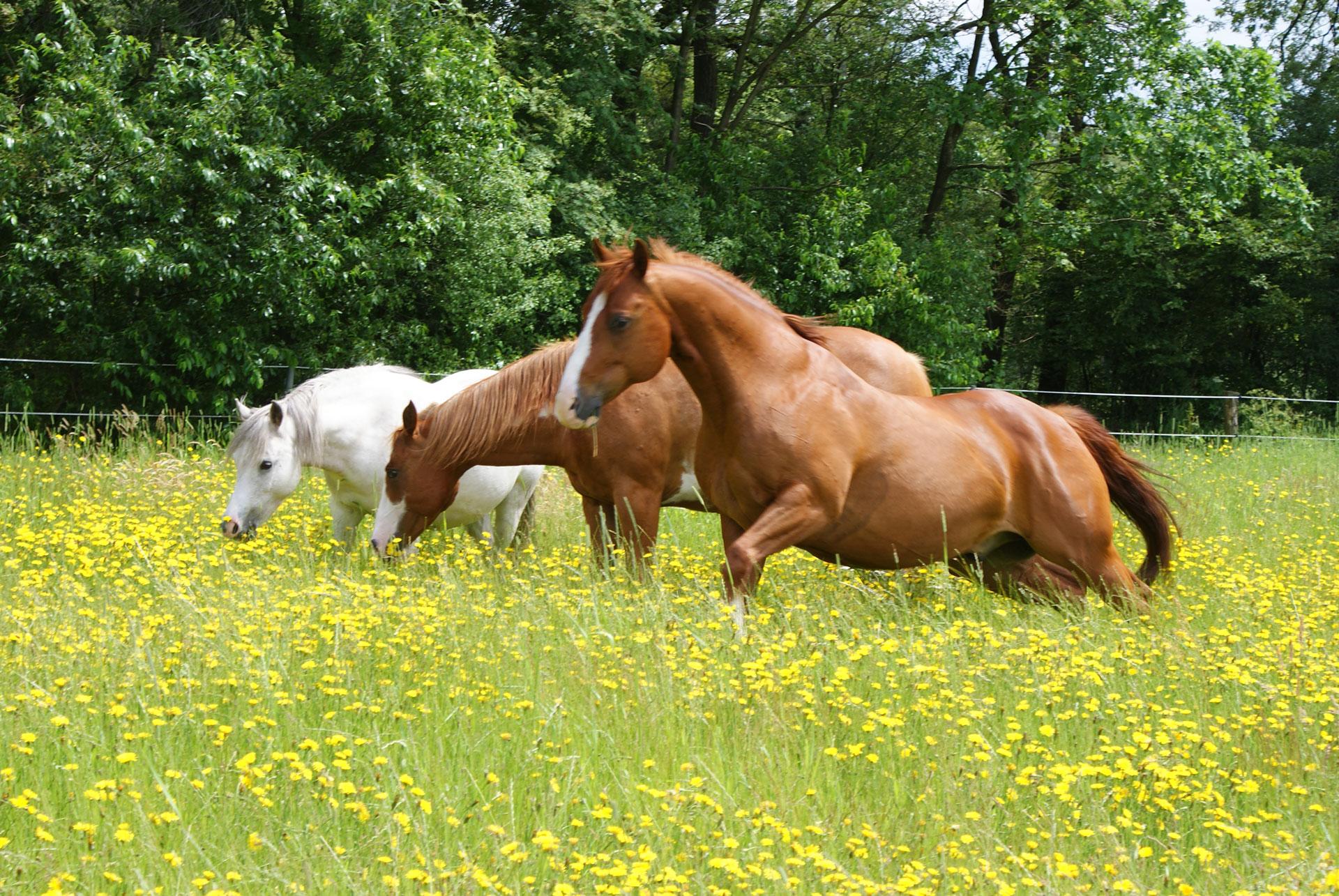 "Pferd Smart Effekt ""Ive"""
