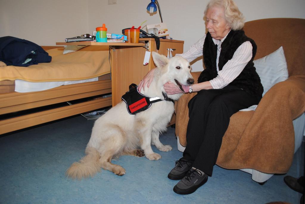 Tiergestützte Therapie in der Geriatrie mit Therapiehund Charly