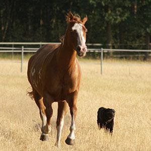 Therapietiere Pferd und Hund